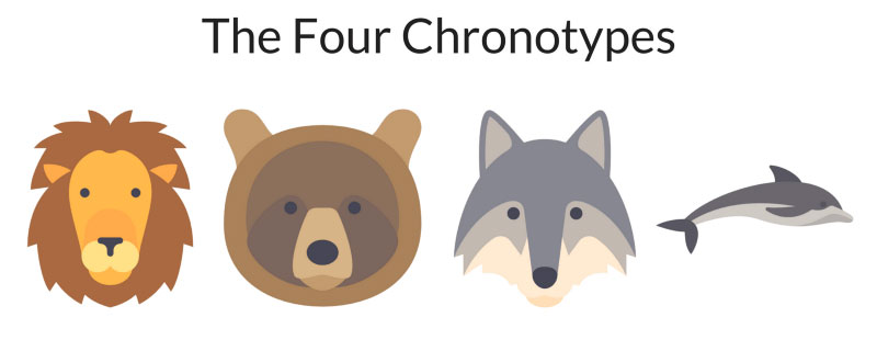 The Four Chronotypes